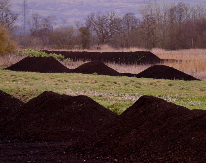 Peat heaps and reeds