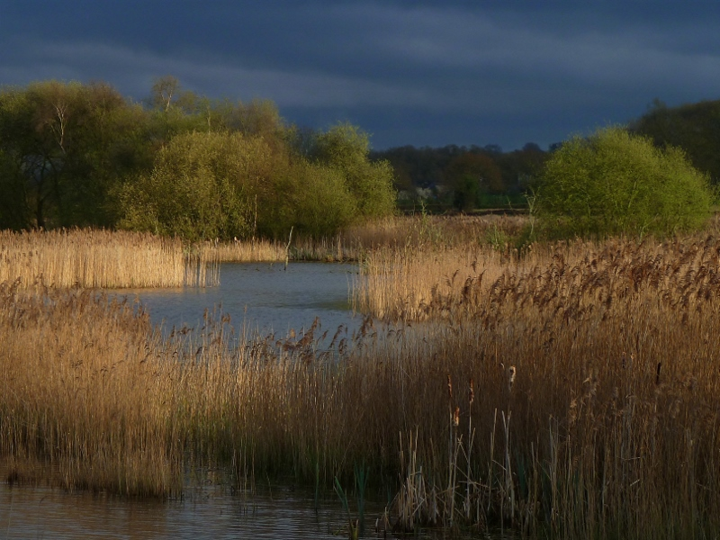 Trees, lake and reeds