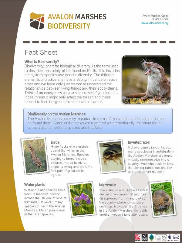 AM Biodiversity Factsheet - (600x800)