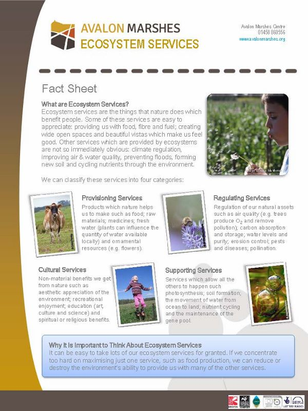 AM Ecosystem Services Factsheet (600x800)