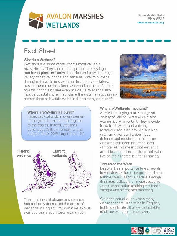 AM Wetlands Factsheet - (600x800)