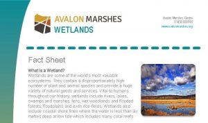 AM_Wetlands_ Factsheet_Cvr_Crp