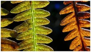 Royal Fern colours