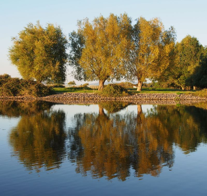 Huntspill River reflections