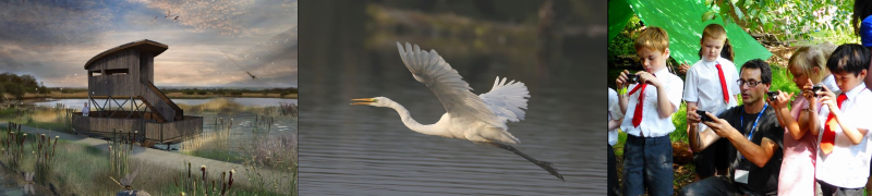 Drawing of hide / Great White Egret in flight / Children learning