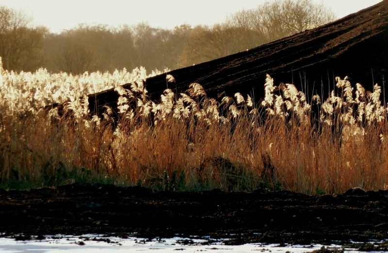Peat and reeds