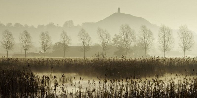 View towards Glastonbury Tor over reedbeds at Sharpham, Somerset, England, UK