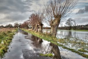 Flooded drove and willows