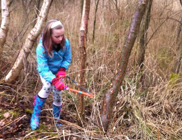 Young girl coppicing