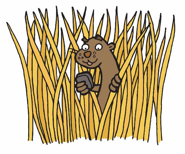 Otto looking through reeds