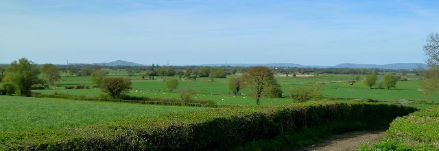 Shapwick Moor from the Nidons