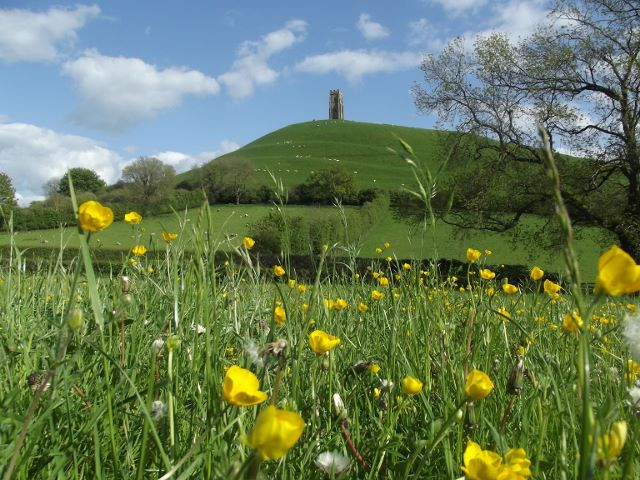 Glastonbury Tor and flowers